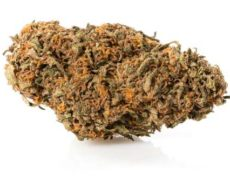 Master Kush Cannabis Light
