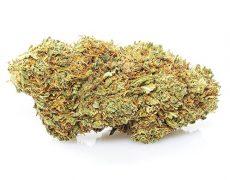orange skunk cannabis legale