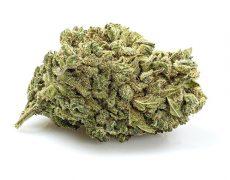 infiorescenza cannabis light gorilla glue