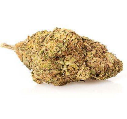 mango haze cannabis light italia