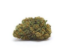 orange-bud-weed
