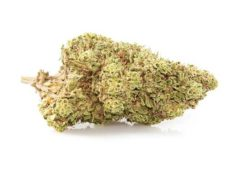 orange skunk cannabis legale