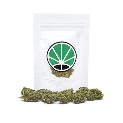 amnesia-haze-marijuana