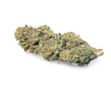 lemon-cheese-weed-marijuana-legale-cannabis-italia