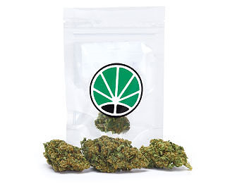 lemon-cheese-weed-marijuana-legale-cannabis-italia