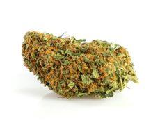 cima di California haze marijuana legale