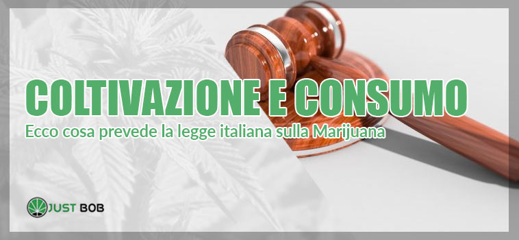 la legge italiana sulla marijuana