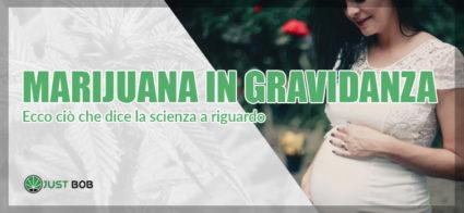 marijuana in gravidanza