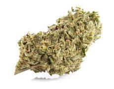 Melon Kush cannabis online