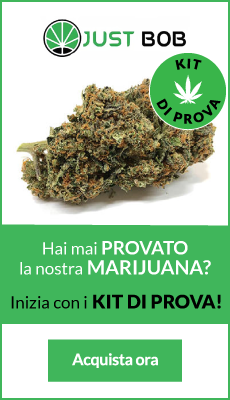 ecommerce marijuana light legale in italia