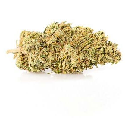 melon kush weed cannabis legale italia