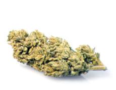 melon-kush-weed-cannabis-legale-italia