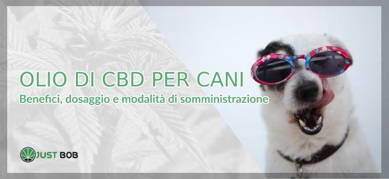 olio di cbd per cani