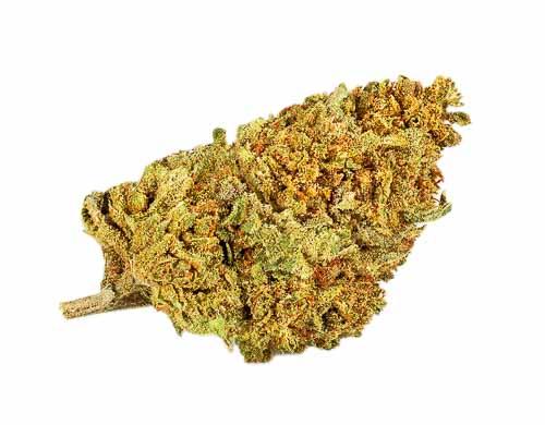 Justbob Cannabis legale