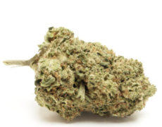 do-si-dos-cannabis-light-italia