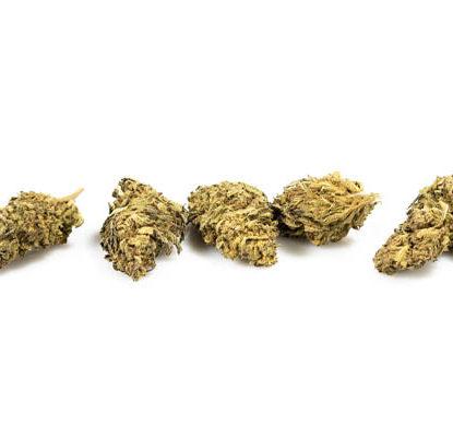 cime di cannabis light WHITE WIDOW