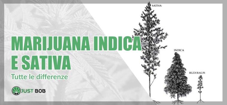 indica marijuana sativa