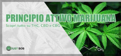 principio attivo marijuana