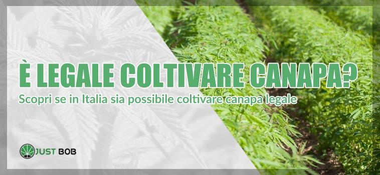 è legale coltivare canapa