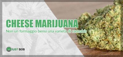 cheese marijuana light