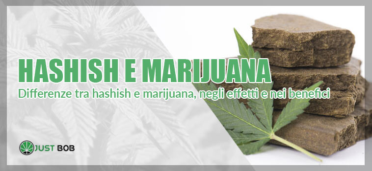 hashish e marijuana differenze