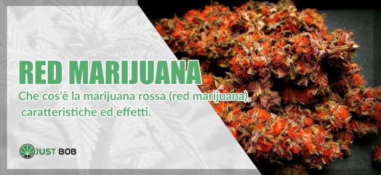 red marijuana