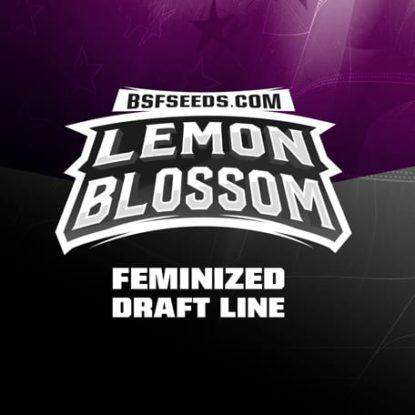 Lemon-Blossom-fem-logo