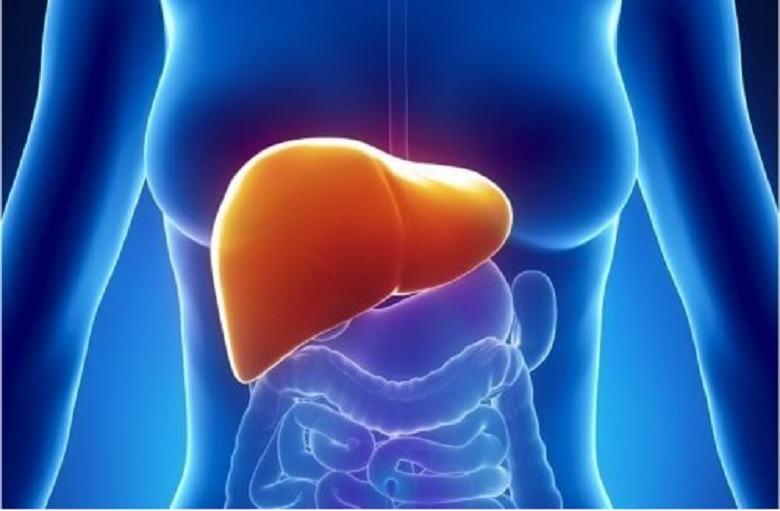 effetti della marijuana sul fegato