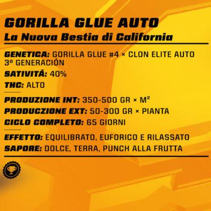 gorilla-glue-auto-proprietà-info-semi-canapa