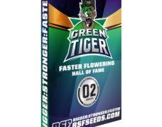 green-tiger-semi-canapa-femminizzata