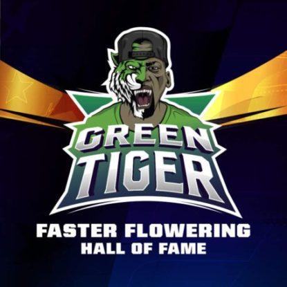 green-tiger-semi-cannabis-logo