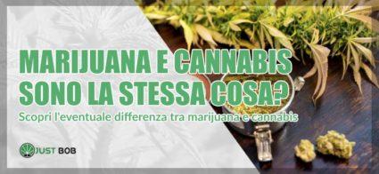 marijuana e cannabis sono la stessa cosa