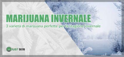 marijuana invernale
