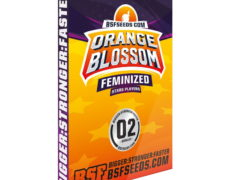 orange-blossom-femminized