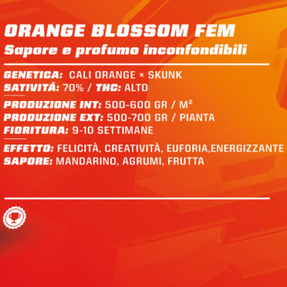 orange-blossom-femminizzata-semi-canapa-info