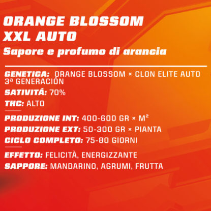 orange-blossom-xxl-auto-proprietà-semi-canapa