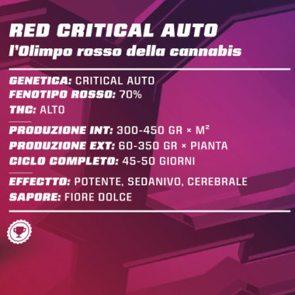 red-critical-auto-informazioni-semi-cannabis