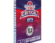 red-critical-semi-marijuana-cannabis-seeds