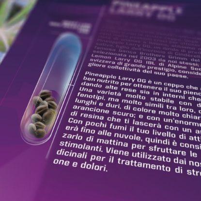 semi-cannabis-thc