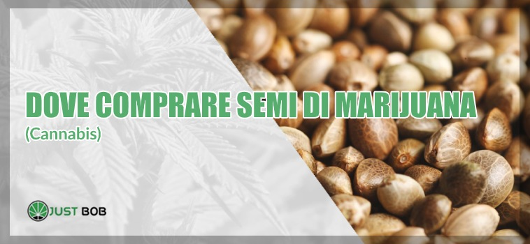 dove compare semi di marijuana (cannabis)