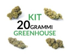 Kit 20 grammi greenhouse Justbob.it