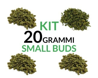 Kit 20 grammi Small Buds Justbob.it