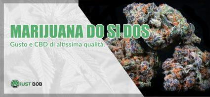 marijuana do si dos light