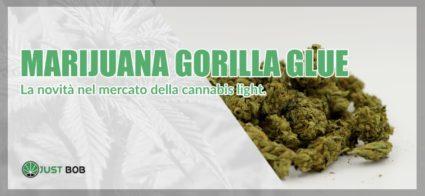 Marijuana Gorilla Glue cannabis light