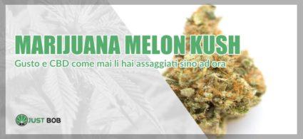 marijuana melon kush light