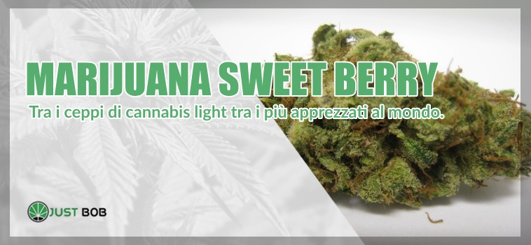 marijuana sweet berry