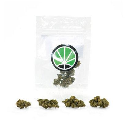 master-kush-weed-cannabis-legale-italia