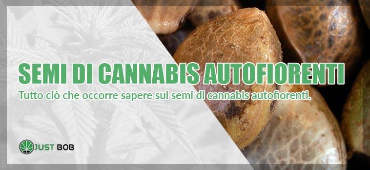 semi di cannabis auto fiorenti online