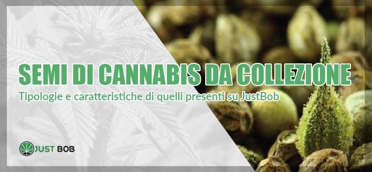 dettaglio dei semi di cannabis da collezione presenti su Justbob