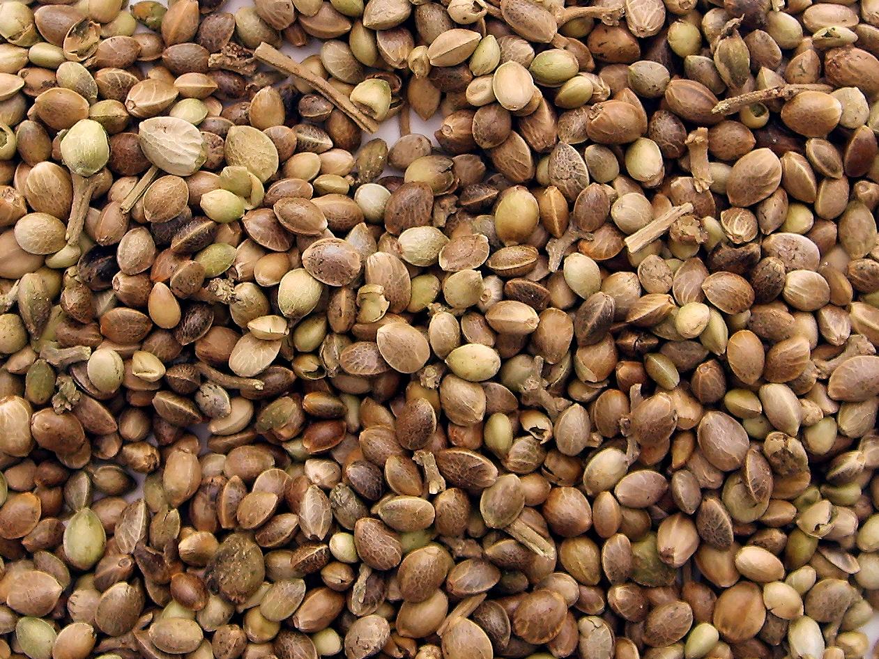 semi di maria autofiorenti